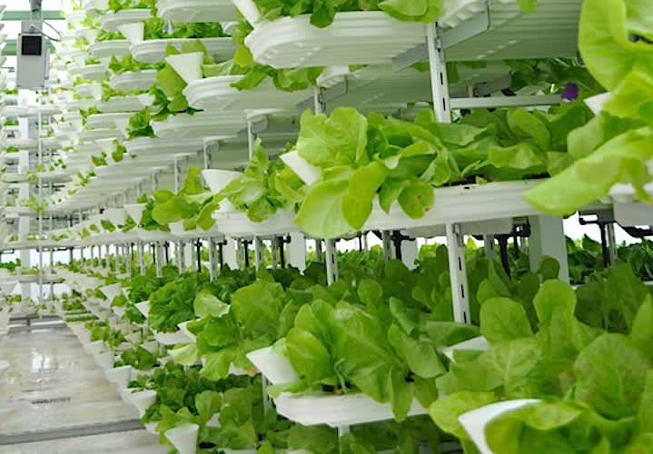 &ever CEO says indoor vertical farm will produce 1.5 tons of produce