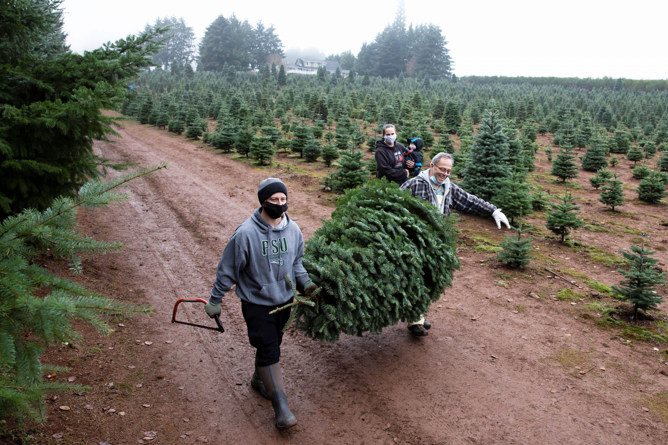 Christmas tree gross sales are telling a holly, jolly financial story