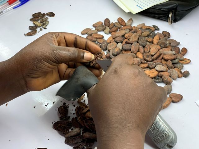 Ivory Coast cocoa farmers threaten to boycott trade sustainability packages