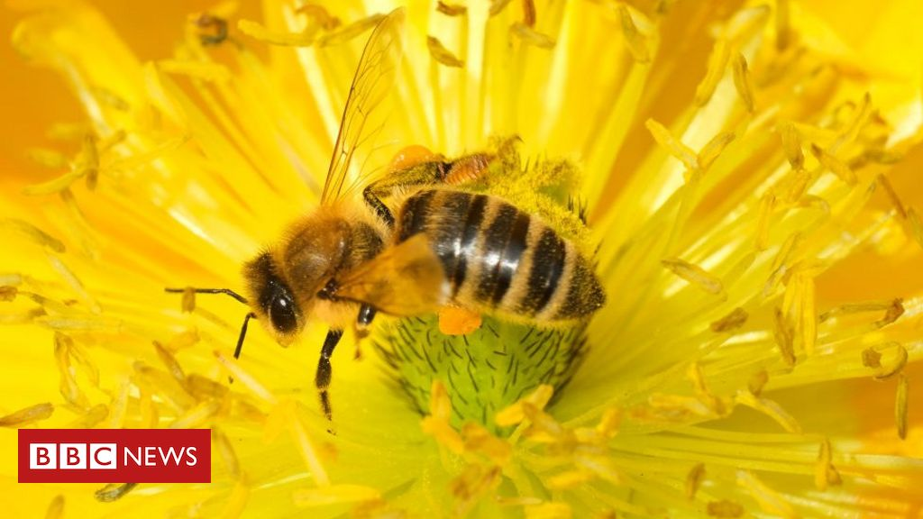 UK permits emergency use of bee-harming pesticide