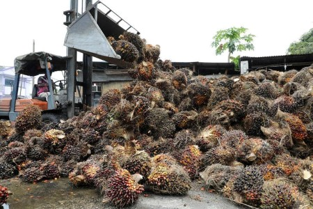 VEGOILS-Palm oil climbs 2% on larger April exports, however set for weekly decline