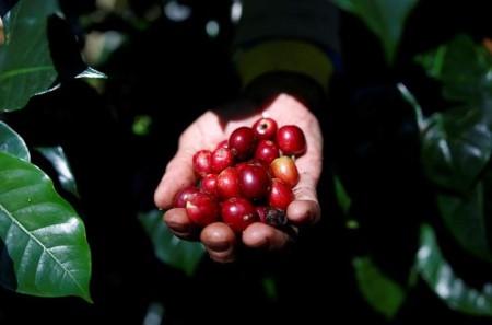 SOFTS-Arabica espresso climbs, uncooked sugar additionally rises