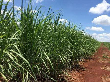 TRS cuts world sugar surplus forecast for 2021/22