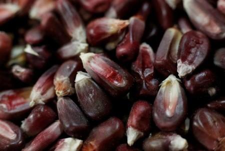 Mexican choose rejects trade bid to halt GMO corn, glyphosate ban