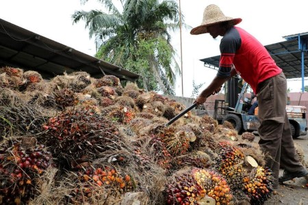 VEGOILS-Palm oil reverses early positive aspects as lockdown fuels demand considerations