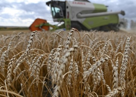 Russian wheat export costs regular as a result of a stronger rouble