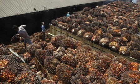 Indonesian palm plantations urged to tighten COVID-19 curbs as infections climb