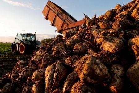 SOFTS-Sugar costs fall on ample provides; cocoa, espresso additionally down