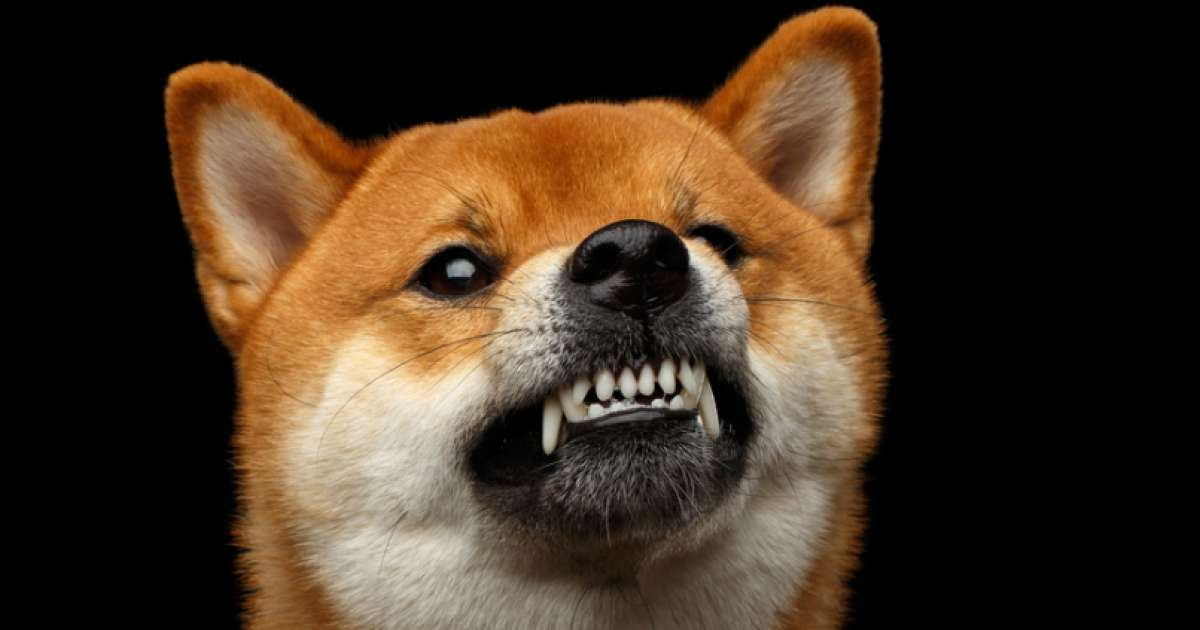 Dogecoin creator blasts crypto as right-wing, hyper-capitalistic and 'cult-like'