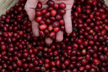 SOFTS-Arabica slips after topping $2 per lb on freak Brazil frosts